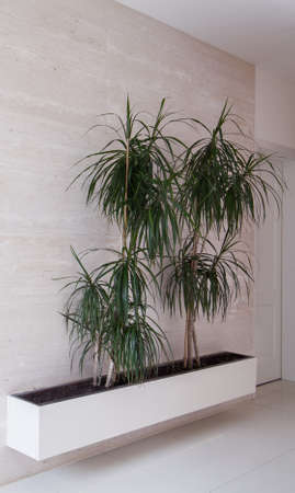 anteroom: Small trees in flowerpots in white marble corridor