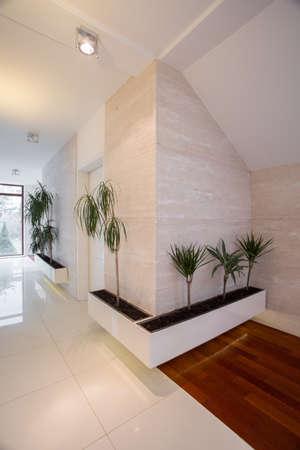 flowerpots: Plants in flowerpots in white corridor with marble floor