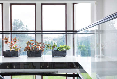 sill: Green plants on window sill in modern house Stock Photo