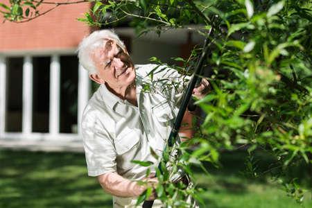 horticulturist: Elder horticulturist cutting tree branch in the garden