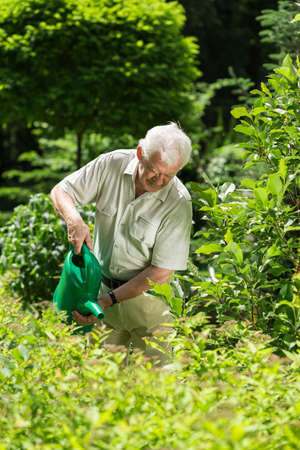 regar las plantas: Jardinero mayor regar las plantas en el patio trasero