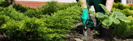 Panoramic view of horticulturist planting flower in lush garden