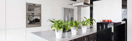 worktop: Flower pots on the worktop in modern kitchen Stock Photo