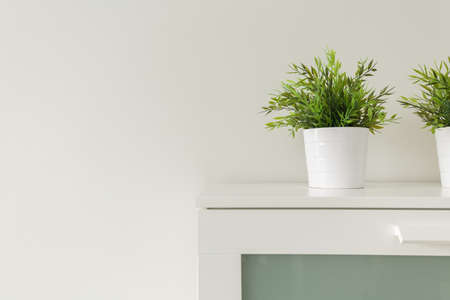 home confort: Close up of green plants in white pots on cabinet Stock Photo