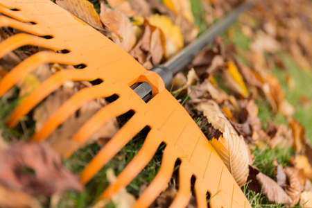 rake: Close up of a rake and leaves in the garden Stock Photo