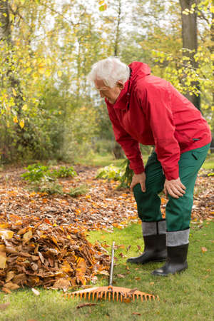 fall of the leaves: Senior man working in a garden during autumn