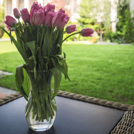 violet residential: Bouquet of violet tulips on the table