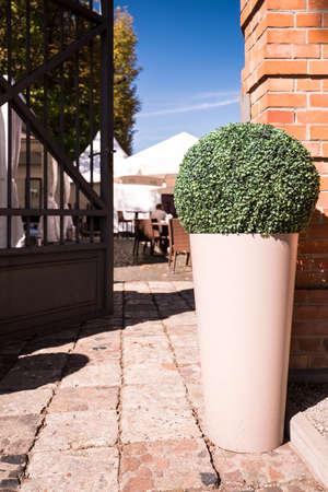 pavement: Shrub in flower pot in front of door