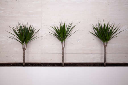 pot light: Home palm plants on white backgound in modern style