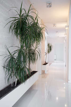 lighted: White shiny lighted corridor with home plants