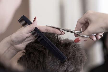 comb hair: Hairdresser with scissors and comb cutting short hair