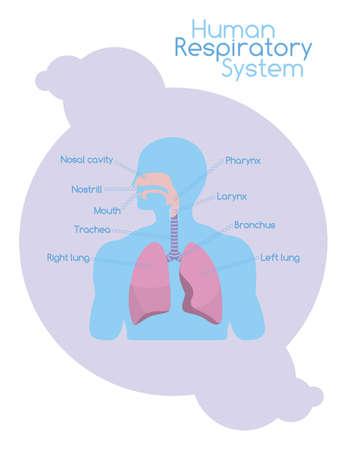 aparato respiratorio: Tarjeta blanca con el esquema humano que muestra el sistema respiratorio con estructuras firmados Vectores