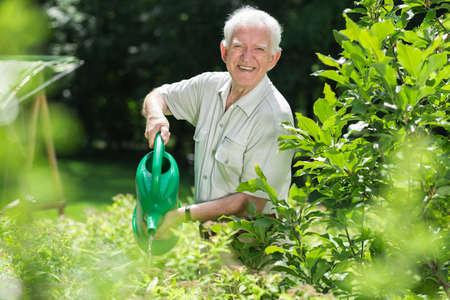 water plants: Elderly man is pouring water on his plants Stock Photo