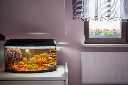 exotic fishes: Aquarium with exotic fishes and coral reef