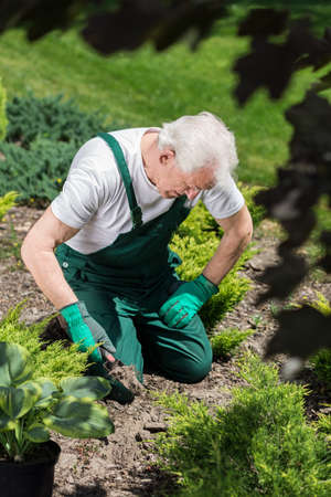 digging: Senior gardener digging in the ground to plant flowers