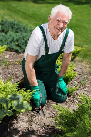 hobbyist: Retired man cultivating the garden in sunny day