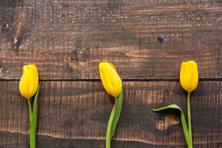 rustical: Three yellow tulips lying on rustical, wooden board Stock Photo