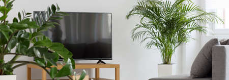 indoor plants: Shot of a TV, plants and a sofa in a modern living room Stock Photo