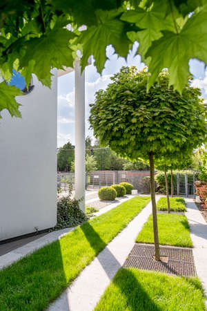 decor birch ornamental youngii timespacegarden best sun height zone planting structural trees decorative large pendula deciduous to feet weeping betula full tre