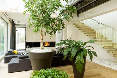 현대 거실에서 식물의 총
