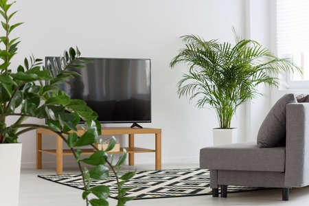 furniture home: Light room with tv, sofa, pattern carpet and green plants
