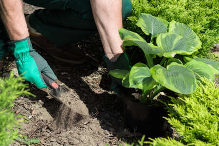 closer: Closer shot of arms in gloves planting the seedling with the gardening tool