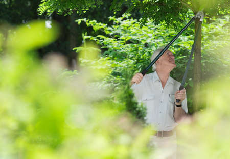 felling: Older man concentrated on felling the tree branches in a garden Stock Photo