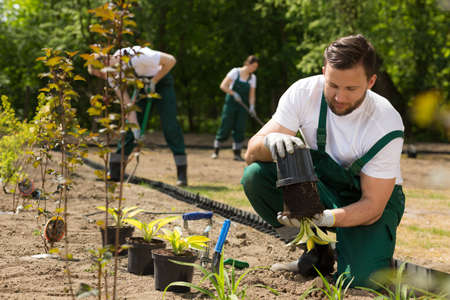boiler suit: Team of the gardeners digging and weeding the bed