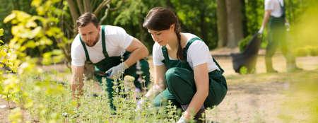 Schot van twee tuinmannen planten van bloemen in een tuin Stockfoto