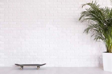 clearness: Skateboard and plant  on the background of brick white wall Stock Photo