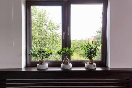 Fenêtre avec cadre en bois brun, trois arbres bonsaï en pots blancs debout sur un rebord de la fenêtre brun