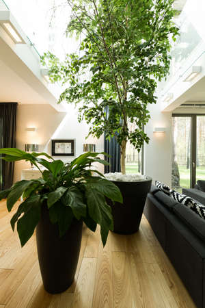 Birch tree in modern house- creating your own micro-climate