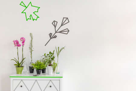 Potted plants: Image of decorative houseplants standing on a new design white commode