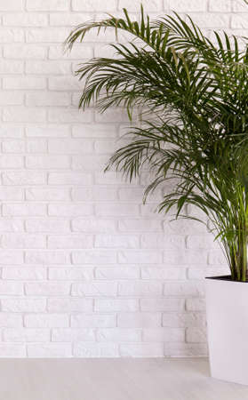 White flower pot with a palm tree on a white brick wall background stock photo white flower pot with a palm tree on a white brick wall background mightylinksfo
