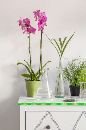 botanist: Flower pots with orchids located on a white commode