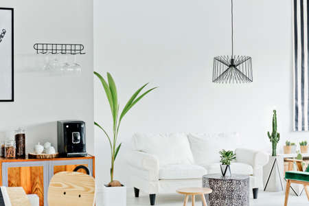 White living room with sofa and decorative houseplant Stock Photo