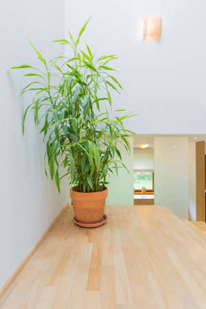 wood panelled: Staircase landing with bright panelled flooring and terracotta flower pot Stock Photo