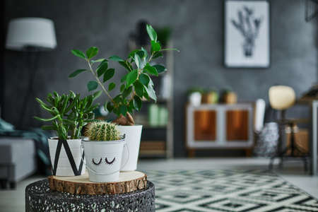 Decorative green houseplant in pot standing on metal table