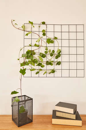 pot plant: Wooden tabletop with books and plant on it