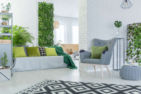 Bright living room with sofa, armchair, pouf and green plants