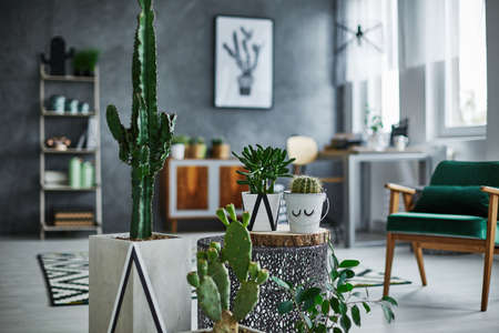 Modernly designed room with cacti decorations Stock Photo