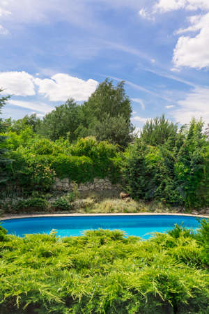 Backyard swimming pool surrounded by lush vegetation on a sunny day