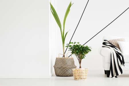 Plants in flowerpots in white modern designed living room