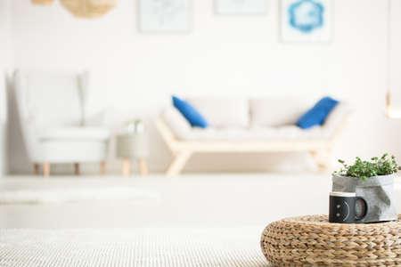 안락 의자, 소파, 등나무 주전자 및 식물이있는 흰색 방 스톡 콘텐츠 - 79008765