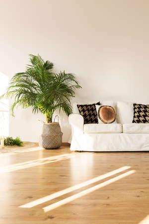 Soggiorno semplice, bianco con divano, impianto, pavimento in legno Archivio Fotografico - 78949341
