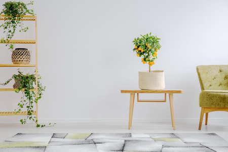Tropischer akzent im stilvollen minimalistischen interieur