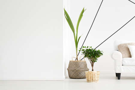 部屋の隅に立っている緑の新鮮な植物 写真素材