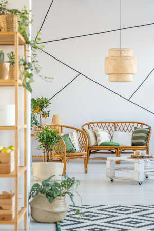Sofa, chair and plants in trendy living room