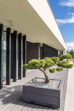 앞뜰에 정자 나무와 현대 집 건축