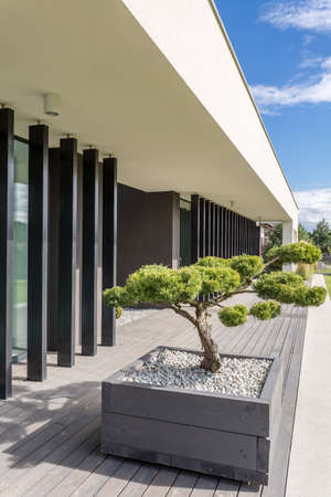 Modern house architecture with baonsai tree on a front yard
